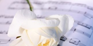 Roses_Closeup_White_457378