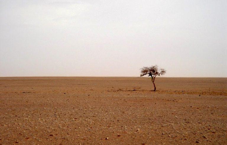 """""""El Sonido del Hambre"""", 11 artistas contra el hambre del Sáhara"""